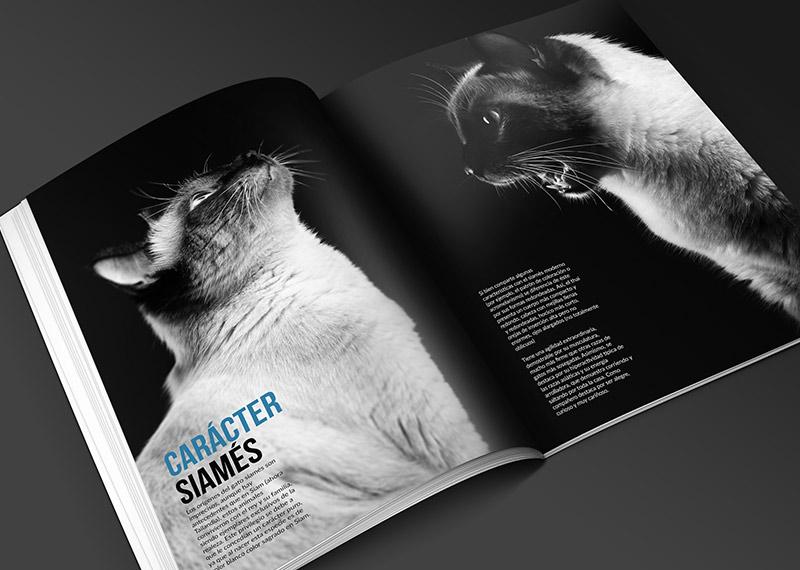 Diseño revista clases photoshop